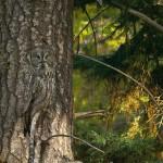 Vanishing Act, l'art du camouflage en nature