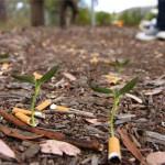 Cigg Seeds : Des mégots biodégradables qui contiennent une graine