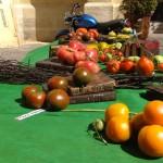 Fête de la tomate : découverte de milliers de variétés